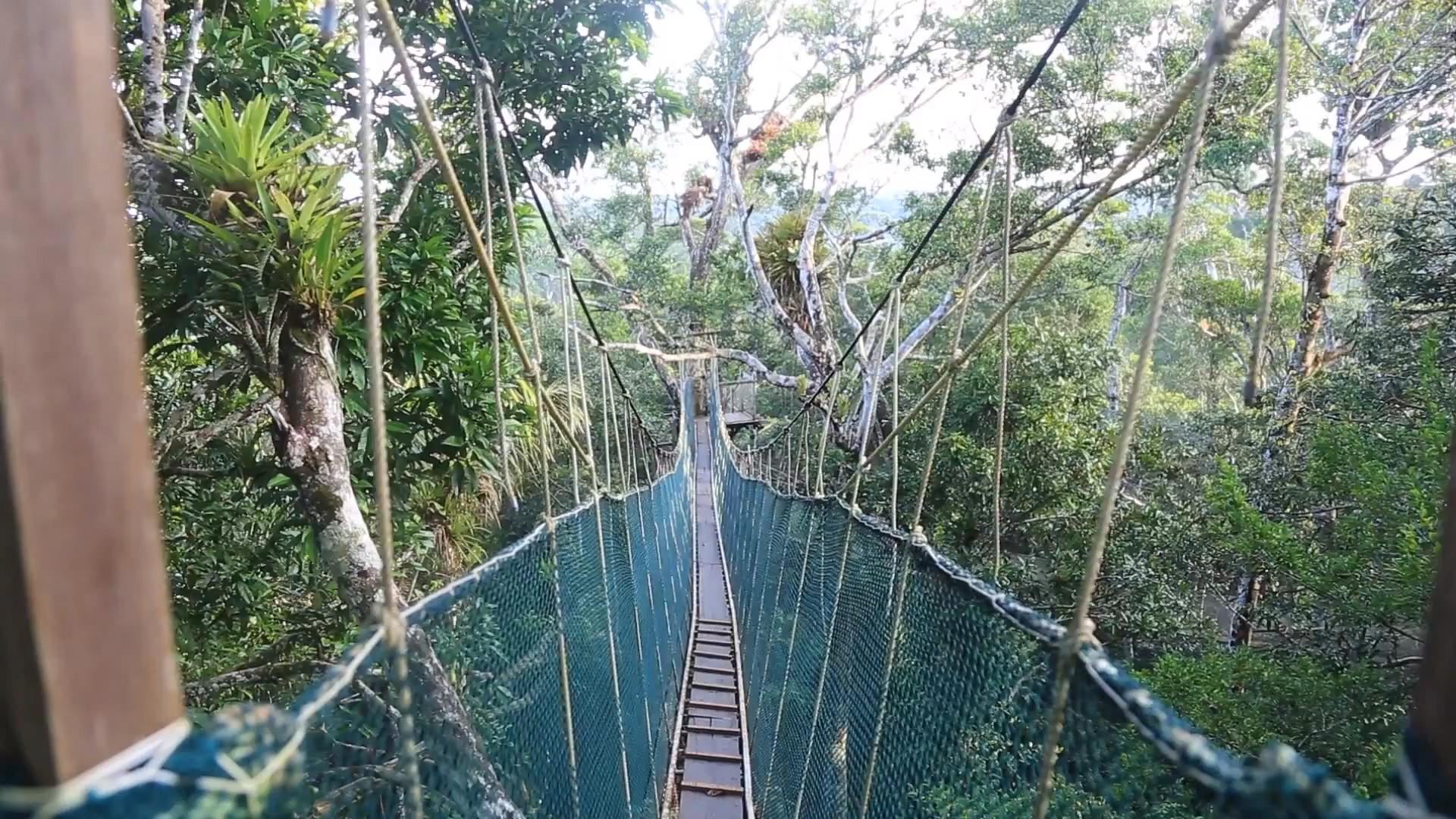 Amazon Explorama Lodges | Canopy Walkway & Amazon River | Trips Amazon River | Amazon Lodge Iquitos | Amazon ...